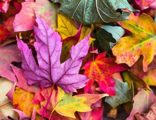 Preparing your house for autumn